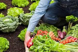 Cung - cầu thực phẩm hữu cơ chưa gặp nhau