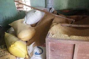 Quảng Nam: Điều tra vụ mất 49 cây vàng