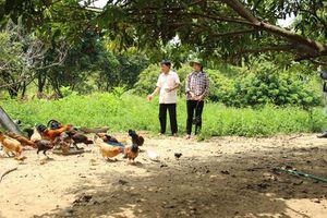 Khâm phục ý chí làm giàu của đôi vợ chồng khởi nghiệp từ 5 ha đất hoang