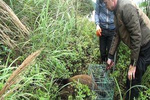Quảng Ninh: Thả nhiều động vật bán hoang dã về vườn Quốc gia Bái Tử Long