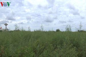 Dự án Kho dự trữ muối Quốc gia tại Bạc Liêu bị hoang phế, diêm dân bức xúc?