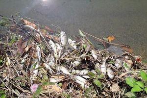 Quảng Nam: Bước đầu xác định được nguyên nhân khiến cá chết hàng loạt