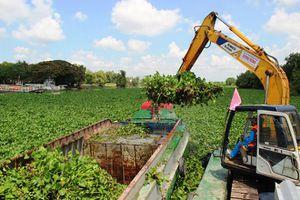 TP.HCM chi hơn 28 tỉ đồng để vớt lục bình, rác thải trên kênh rạch