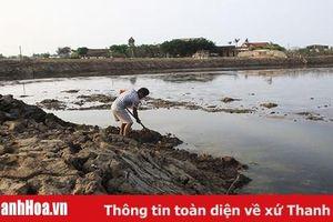 2 tháng đầu năm, sản lượng khai thác, nuôi trồng thủy sản huyện Nga Sơn đạt hơn 983 tấn