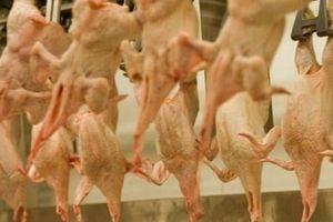 Đại sứ Mỹ tại Anh tố cáo 'chiến dịch bôi nhọ' hàng nông sản Mỹ