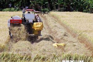 Long An đưa ra giải pháp đẩy mạnh tiêu thụ lúa gạo trong dân