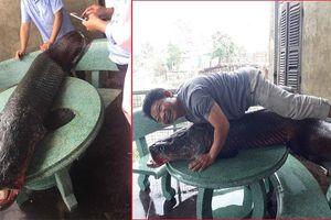 Bác tin bắt được cá 'khổng lồ' nặng 110kg ở sông Nhuệ, Hà Nội