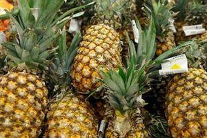 Dứa organic vào Mỹ: 'Quả ngọt' sau hành trình gian nan