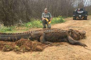 Mỹ: Giải cứu cá sấu khổng lồ có vết đạn bắn khỏi mương nước