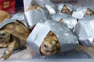 Philippines: Hơn 1500 cá thể rùa không có người nhận tại sân bay Manila