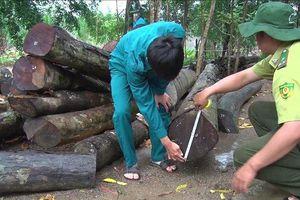 Bình Phước tuyển Phó chi cục trưởng Kiểm lâm sau bê bối rừng 'chảy máu'