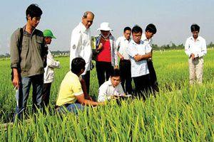 Góp sức khẳng định thương hiệu nông sản Việt