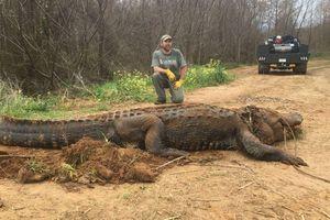 'Choáng' với cá sấu khổng lồ nặng hơn 300 kg khiến nhiều người không tin nổi vào mắt