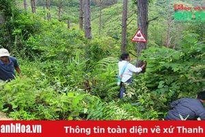 Tiếp tục tăng cường các biện pháp bảo vệ rừng, ngăn chặn tình trạng phá rừng, cháy rừng