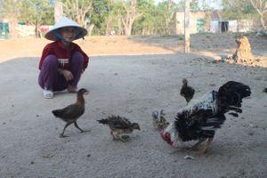 Ngôi làng ở Gia Lai nuôi gà lông mọc ngược chỉ để… biếu tặng