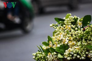 Đẹp nao lòng mùa hoa tháng 3 Hà Nội