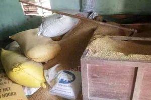 Pháp luật 24h: Kẻ trộm chỉ mất 2h để lấy 49 cây vàng trong kho lúa