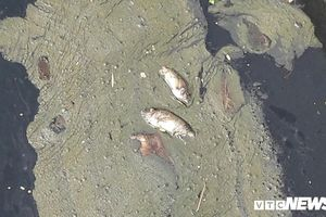 Hồ điều tiết giữa lòng Đà Nẵng ngập nước thải gây ô nhiễm khủng khiếp