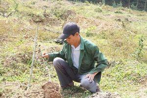 Thừa Thiên Huế: Kẻ lạ mặt đe dọa người làm, phá vườn bưởi của lão nông tật nguyền