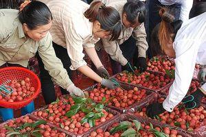 Rau, quả Việt: Tìm đường chính ngạch sang Trung Quốc