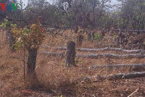 Đề nghị khởi tố vụ phá 7,3 ha rừng ở Chư Prông - Gia Lai