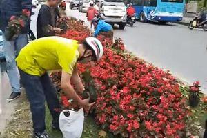 Vụ 'hôi hoa' trên đường Kim Mã: Không có chuyện doanh nghiệp cho hoa