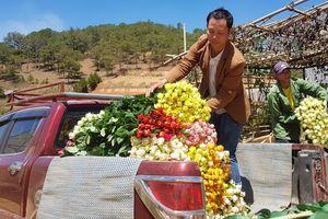 Giá hoa 8.3, hoa hồng Đà Lạt tăng mức kỷ lục