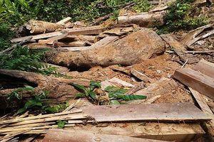 Tan hoang rừng cổ thụ tại huyện Đăk Tô vì lâm tặc