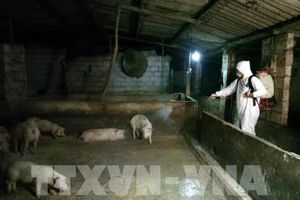 Hòa Bình quyết liệt dập dịch tả lợn châu Phi