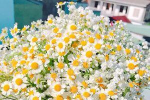 Ngày 8.3, tặng hoa hay phong bì cho 'một nửa'?