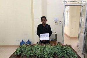 Lai Châu: Bắt quả tang 2 chị em ruột đang 'thu hoạch' hơn 2.300 cây thuốc phiện