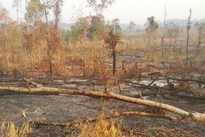 Gia Lai điều tra phá rừng gần đồn Biên phòng