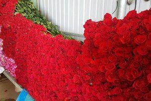 Dịp 8/3 hoa hồng Đà Lạt tăng giá gấp 5 lần vẫn không có để bán