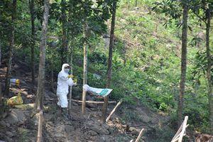 Quảng Nam: Tiêu hủy hơn 4.000 gia cầm tại 2 ổ dịch cúm A/H5N6