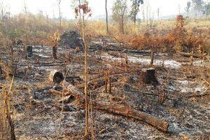 Ngang nhiên đốt phá rừng vùng biên