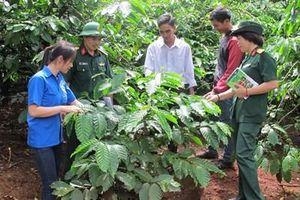 Nâng tầm thương hiệu cà phê Việt Nam