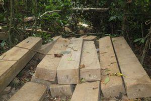 Khởi tố 24 bị can trong đường dây gỗ lậu Phượng 'râu'