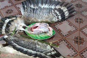 Hà Nội chưa xác minh được chim 'lạ' bị thịt trong clip của Tam Mao TV