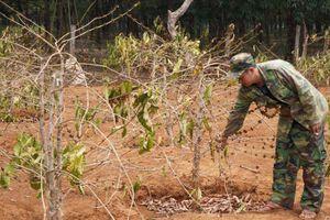 Gia Lai: Nông dân 'oằn mình' chống 'giặc hạn'