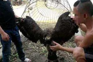 Thông tin mới vụ hai anh em Tam Mao nghi làm thịt chim trong sách đỏ