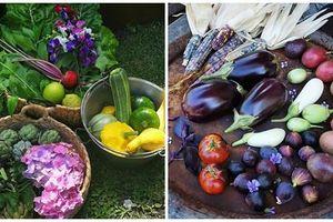 Đủ loại hoa trái siêu độc trong khu vườn 500 m2 của bà mẹ 4 con