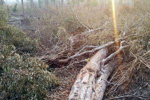Gia Lai chỉ đạo khẩn vụ phá rừng, lấn chiếm đất rừng