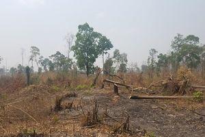 Cần xử lý nghiêm minh các đối tượng phá rừng tại Gia Lai