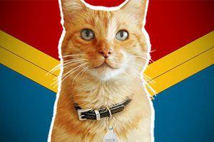 Những sự thật thú vị về em mèo Goose đang gây sốt nhất 'Captain Marvel'