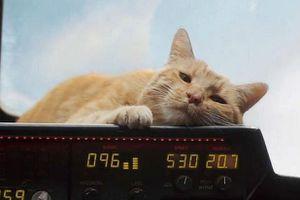 Mèo Goose trong 'Captain Marvel' - tưởng hiền lành nhưng rất nguy hiểm