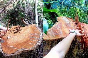 Kỷ luật 6 cán bộ, nhân viên bảo vệ rừng phòng hộ đầu nguồn Tả Trạch