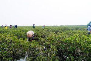 Quảng Ninh: Tích cực thực hiện Chương trình mục tiêu ứng phó BĐKH và tăng trưởng xanh