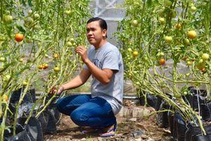 9X khởi nghiệp từ nông nghiệp sạch