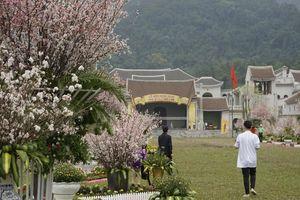 Tận thấy hàng nghìn cành hoa anh đào khoe sắc dưới chân Yên Tử