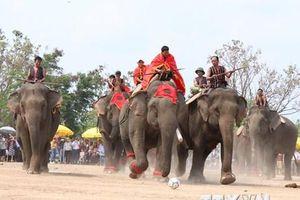 Lễ hội càphê Buôn Ma Thuột lần thứ 7: Đặc sắc Hội voi Buôn Đôn